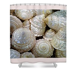 Shells - 4 Shower Curtain