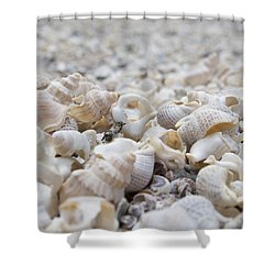 Shells 1 Shower Curtain