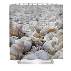 Shower Curtain featuring the photograph Shells 3 by Jocelyn Friis