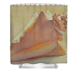 Shells 3 Shower Curtain