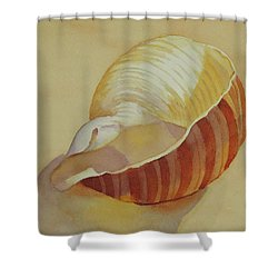 Shells 4 Shower Curtain