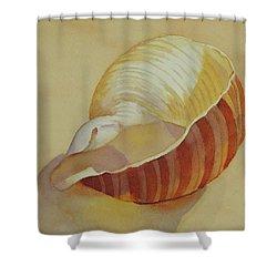 Shells 4 Shower Curtain