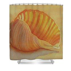 Shells 6 Shower Curtain
