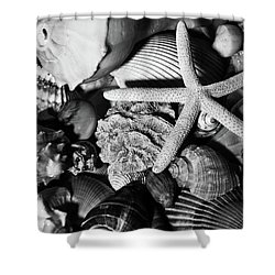 Shower Curtain featuring the photograph Shells And Starfish In Black And White by Angie Tirado
