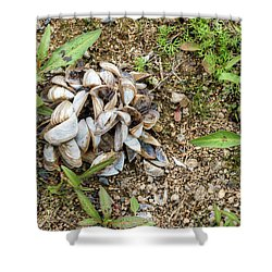 Shower Curtain featuring the photograph Shells Of Freshwater Mussels by Michal Boubin