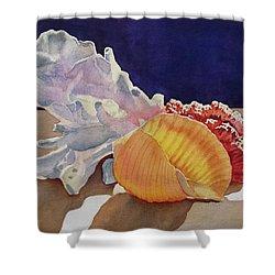 Shells On A Shelf Shower Curtain
