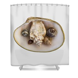 Shells Within A Sea Shell Shower Curtain