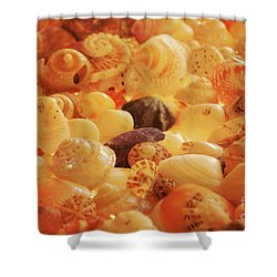 Shells Xvii Shower Curtain by Cassandra Buckley