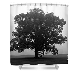 Shelter Shower Curtain by Amanda Barcon