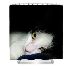 Shelter Cat Shower Curtain