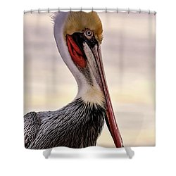 Shelter Island's Pelican Shower Curtain