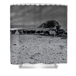 Shepherds Work Shower Curtain