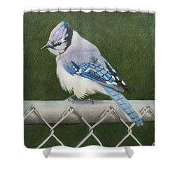 Sherrie's Bluejay Shower Curtain