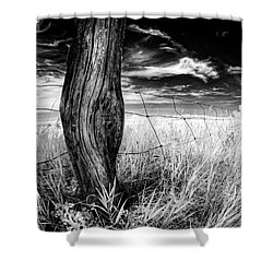 She's Got Legs Shower Curtain by Dan Jurak