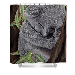 Shhhhh Koala Bear Sleeping Shower Curtain by Kelly Mills