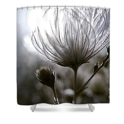 Shimmering Flower I Shower Curtain by Ray Laskowitz - Printscapes