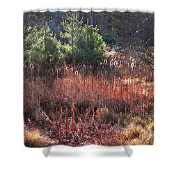 Shimmering Sunlight On The Cattails Shower Curtain