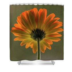 Shine Bright Gerber Daisy Square Shower Curtain by Terry DeLuco