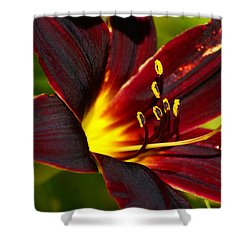 Shower Curtain featuring the photograph Shine From Within by Ben Upham III