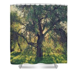 Shine Your Light Shower Curtain by Laurie Search
