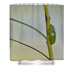 Shower Curtain featuring the photograph  Doris Day Shining Bright by Kathy Gibbons