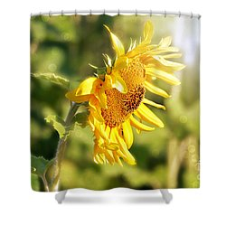 Shining Sun Shower Curtain