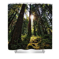 Shower Curtain featuring the photograph Shining Through by Lynn Hopwood