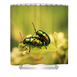 Shiny Pair Shower Curtain by Shane Holsclaw