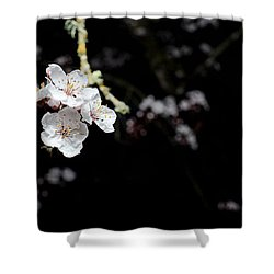 Shiroi Sakura Shower Curtain by Lisa Knechtel