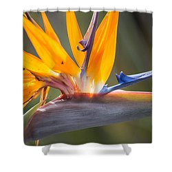 Shower Curtain featuring the photograph Shocktop by Julie Andel