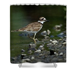 Killdeer  Shower Curtain by Douglas Stucky
