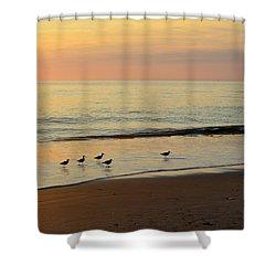 Shorebirds 9/4/17 Shower Curtain