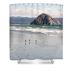 Shower Curtain featuring the photograph Shorebirds At Morro Rock by Art Block Collections