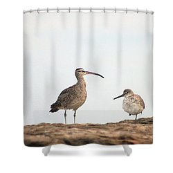 Shorebirds Of Windansea Beach Shower Curtain by Bruce Patrick Smith