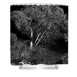 Shower Curtain featuring the photograph Shoreline Tree by Roger Mullenhour