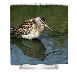 Shower Curtain featuring the photograph Short-billed Dowitcher by Sharon Talson