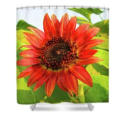 Short Bloom Shower Curtain