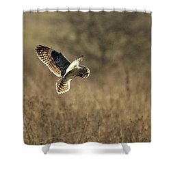 Short-eared Owl About To Strike Shower Curtain