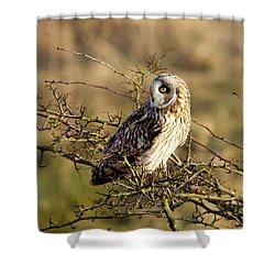 Short-eared Owl In Tree Shower Curtain