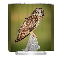 Short Eared Owl Shower Curtain