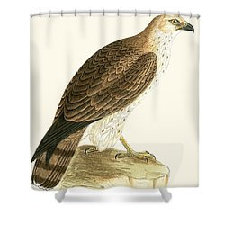 Short Toed Eagle Shower Curtain by English School