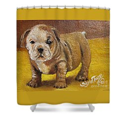 Chloe The   Flying Lamb Productions      Shortstop The English Bulldog Pup Shower Curtain