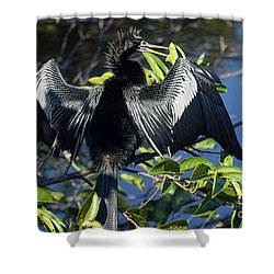 Show Drying Shower Curtain