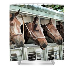 Shower Curtain featuring the photograph Show Horses On The Move  by Wilma Birdwell
