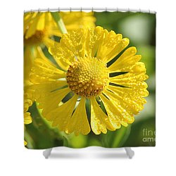 Showered With Love Shower Curtain by Anita Oakley