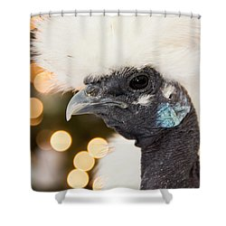 Showgirl A.k.a. Naked Neck Silkies Shower Curtain