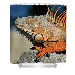 Showing My Spikes Shower Curtain by Pamela Blizzard
