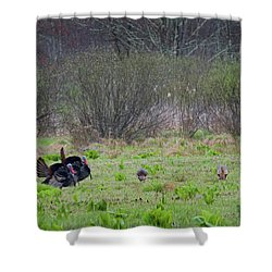 Shower Curtain featuring the photograph Showing Off by Bill Wakeley