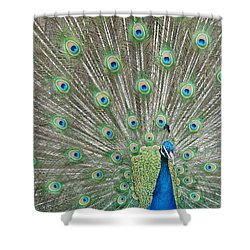 Shower Curtain featuring the photograph Showing Off by Margaret Bobb