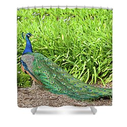 Shower Curtain featuring the photograph Showing Off by Ram Vasudev